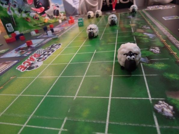 Corsa di pecore all'ultimo centimetro è questo il fascino di Sheep Race